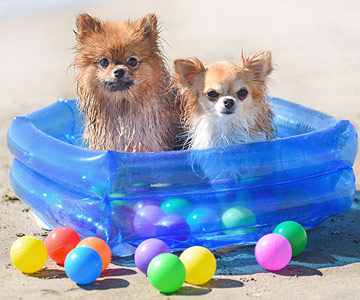 Bälle Bad für Hunde