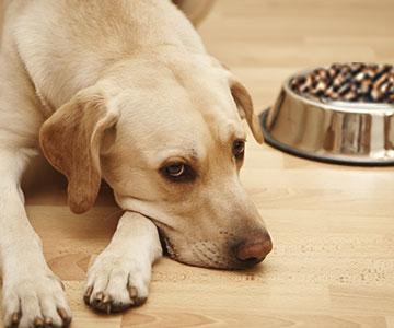 Wenn der Hund nicht fressen will