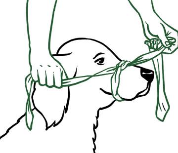 Schnauzverband anlegen