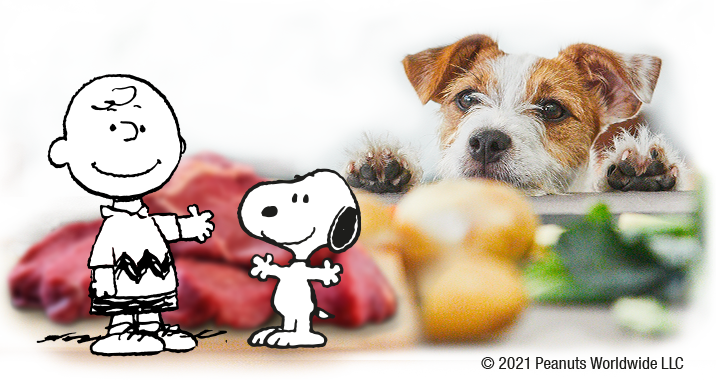 Snoopy explains our