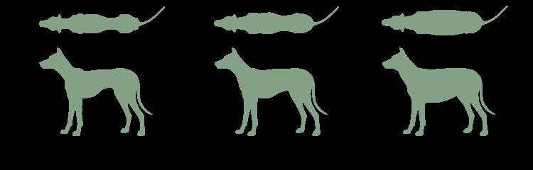 Idealgewicht beim Hund
