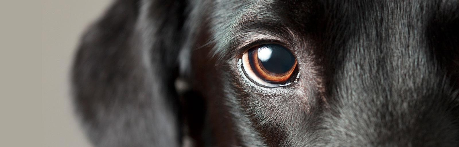 Wie sehen Hunde?