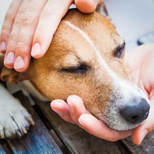 Hauterkrankungen beim Hund