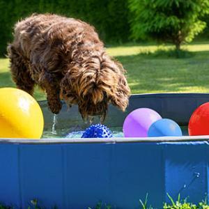 Wasserspiele für Hunde