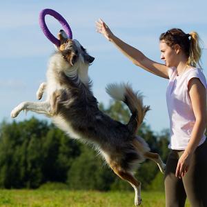 Spieletipps für Hunde