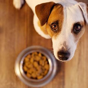 Deklaration von Hundefutter